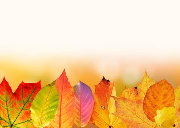 autumn 1649440 1920